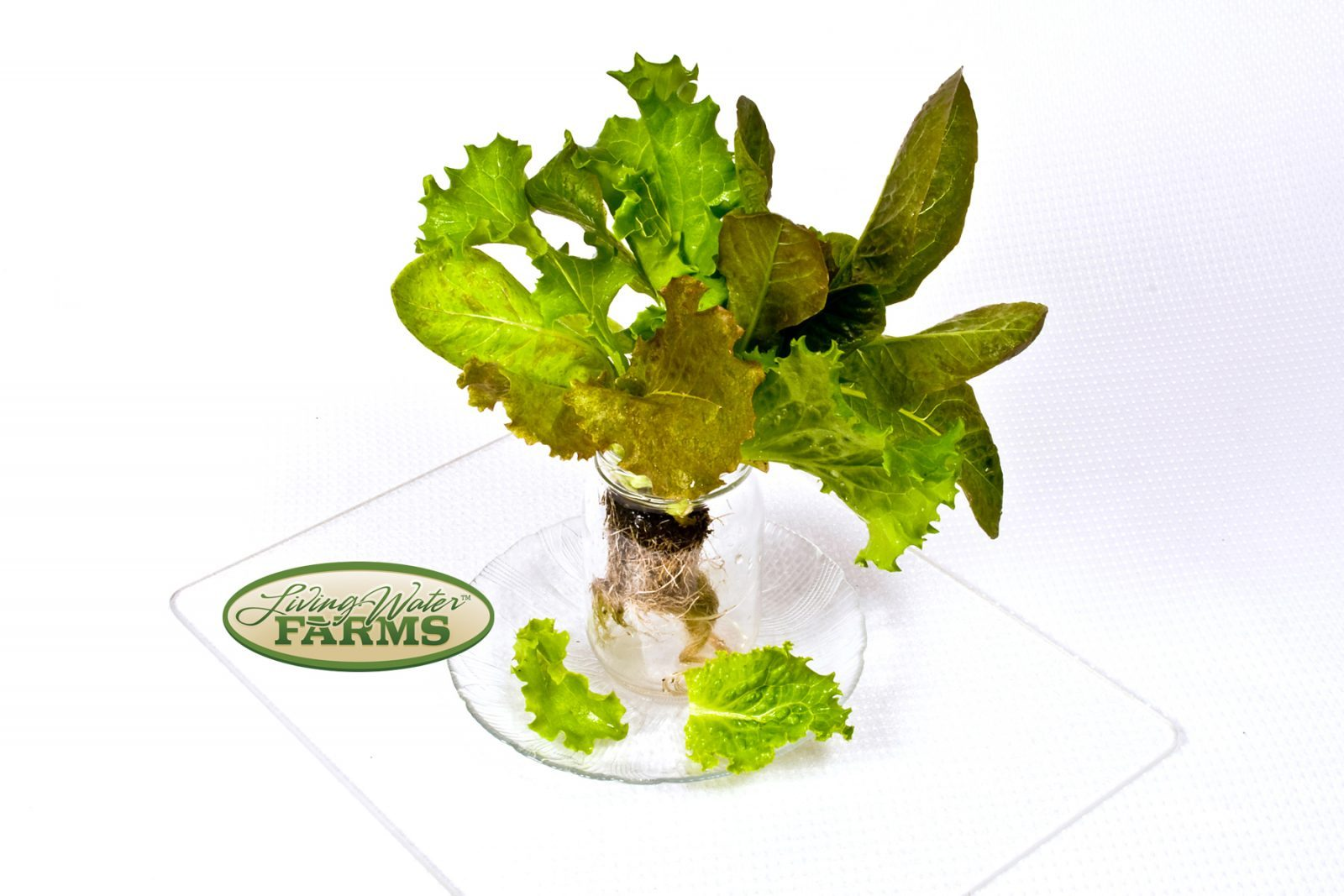 Living Water Farms Living Greens Spring Mix