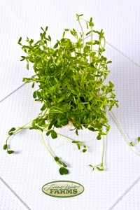 Living Water Farms Micro Greens Pea Shoots
