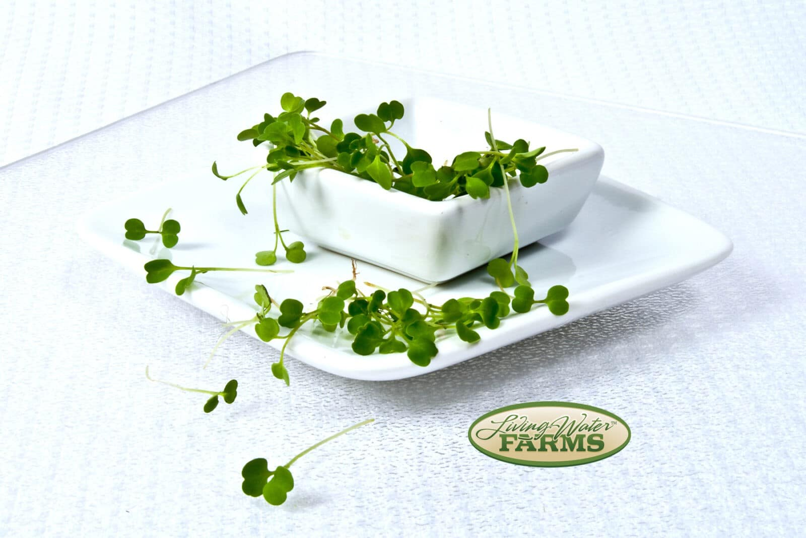 Living Water Farms Micro Greens Arugula