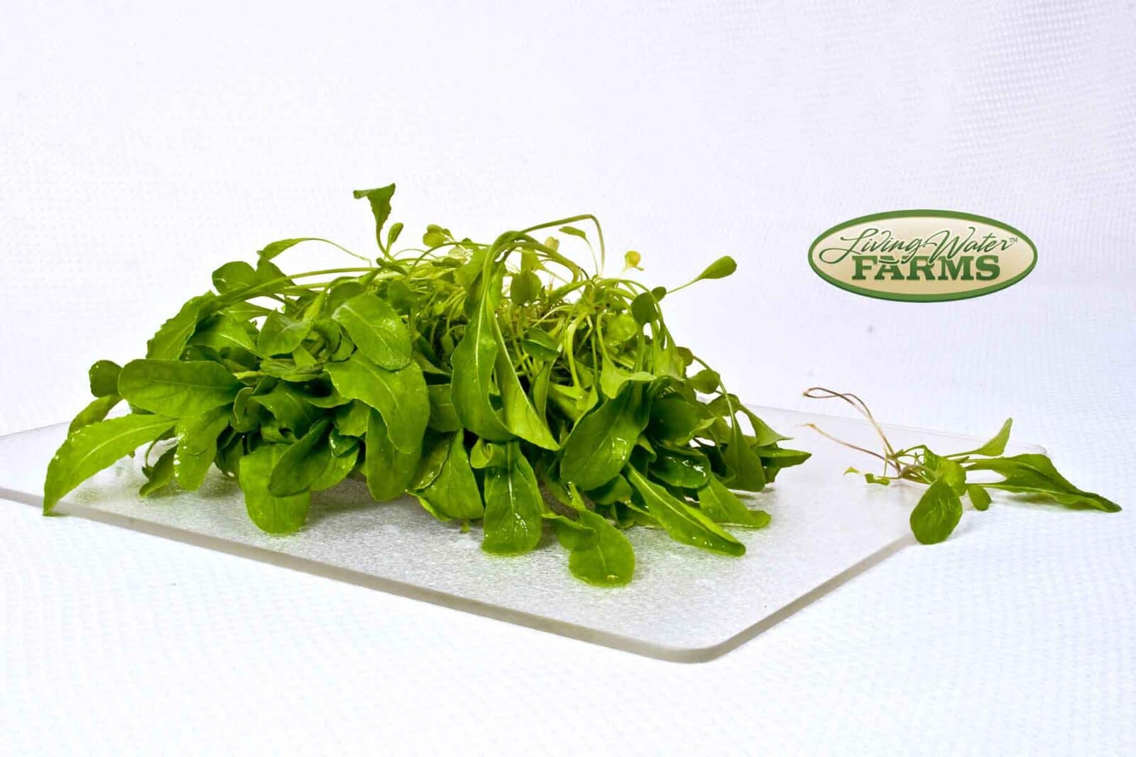 Living Water Farms Living Greens Arugula