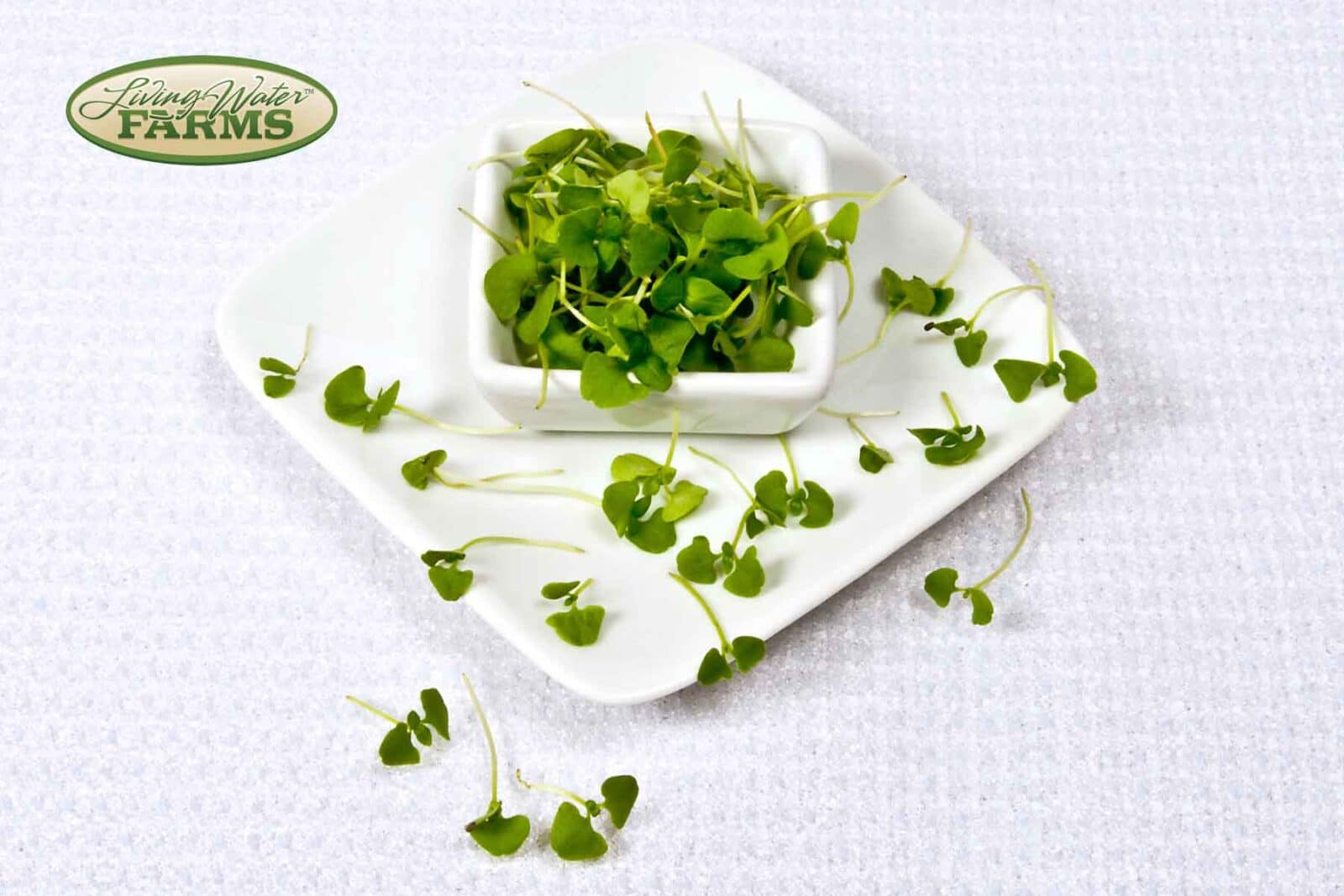 Living Water Farms Micro Greens Basil